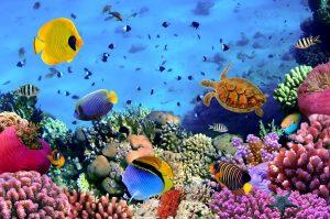 foto-site-coral