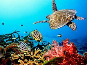 schildpad-coral